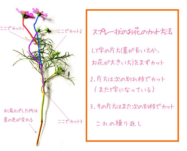 秋桜のカット