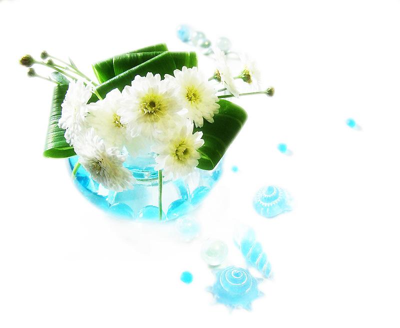 八重咲きマーガレット夏バージョン